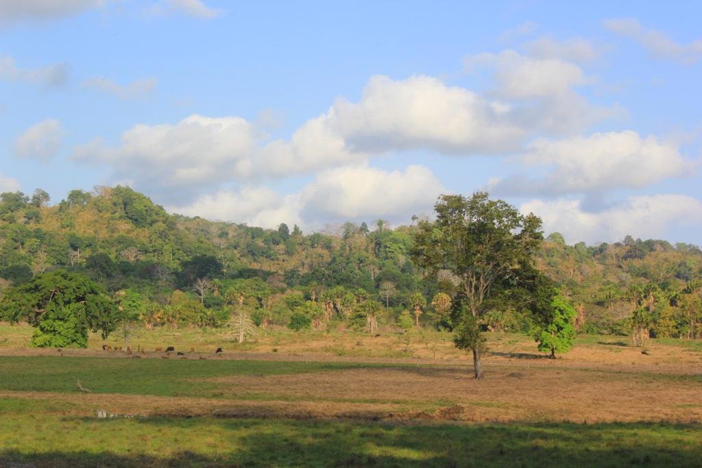 savannah of sadengan